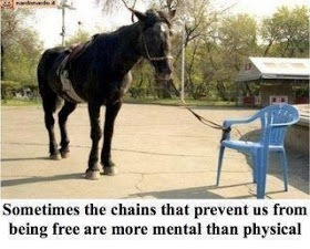 donkey tied to plastic chair and quote: Sometimes the chains that prevent us from being free are more mental than physical.